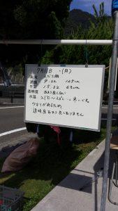 7月船渡し受付ホワイトボード【本日のヒリゾ浜情報】